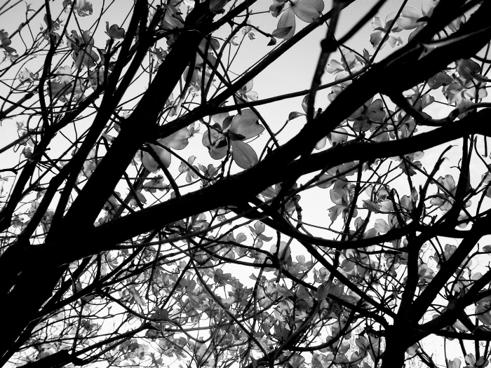 """Branches in Bloom."" PPR_Scribe"